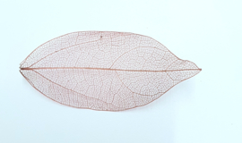 PNS Inlay Leaf 11