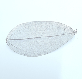 PNS Inlay Leaf 13