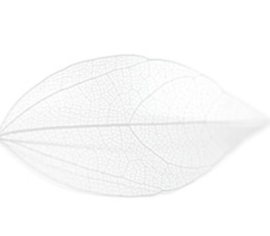 PNS Inlay Leaf 3
