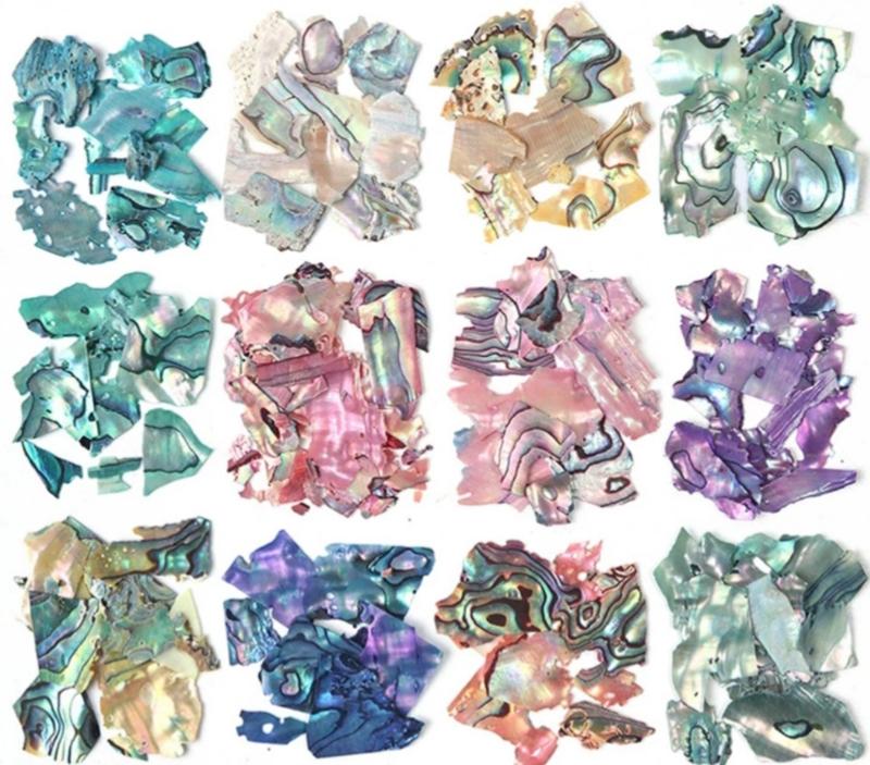 PNS Abalones Set van 12 kleuren