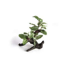 Reptech Ficus Plant