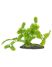 Zoo Med Selaginella Ground Cover