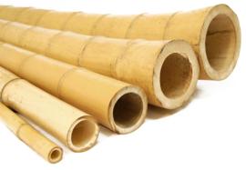 Bamboepaal Ø 3-4 x 50 cm