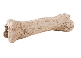Exo Terra Dinosaur Bone