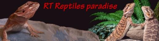 bannerreptile1d20(1).jpg