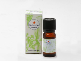 Anijs Ster CO2-select extract Bio (Trachyspermum ammi) 5ML