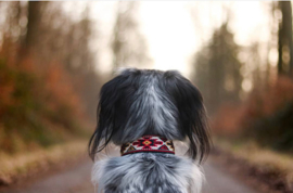 Buddys Dogwear Halsband Peyote Rojo Maat M