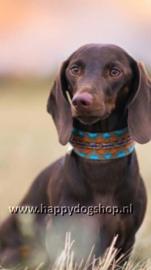 Buddys Dogwear Halsband Etna Green