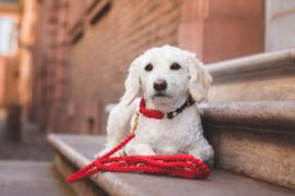 Molly & Stitch Hondenlijn Lipstick