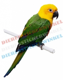 Amazone Ochrocephala  papegaai
