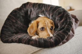 P.L.A.Y.  Snuggle Bed Truffle Brown