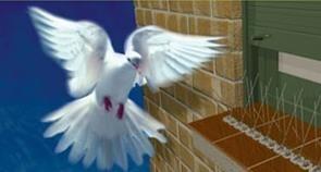 vogelpin01.jpg