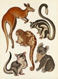 Het dierenboek - Katie Scott en Jenny Broom - Lannoo