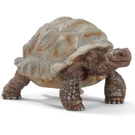 Schleich Reuzenschildpad - 14824