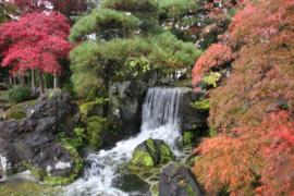 Koimuseum Ojiya_Img-824