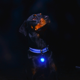 Roglite led lichtje voor de hond