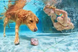 Verkoeling & Zwemmen