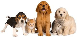 Diervriendelijke inkopen voor huisdieren