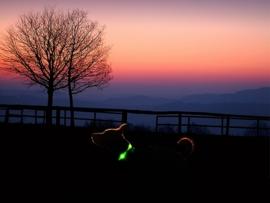 Leuchtie PLUS lichthalsband Groen