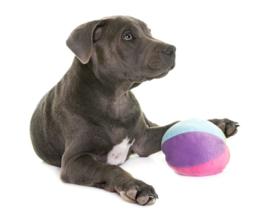 6 redenen waarom jij speelgoed voor jouw hond moet kopen