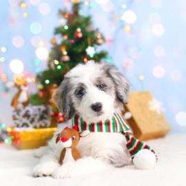 ZippyPaws Holiday Miniz 3-Pack Reindeer