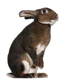 De beste voeding voor knaagdieren en konijnen