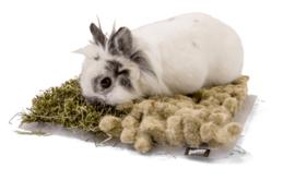 Bunny Nature Snuffelmat voor dwergkonijn en knaagdier