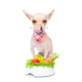Kan mijn hond veganistisch of vegetarisch eten?