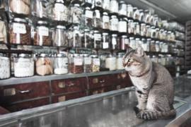 Katten apotheek