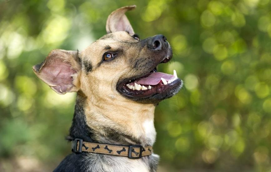 hondengebit natuurlijk gezond houden