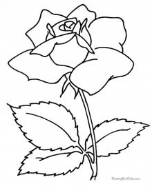 Roos (1)