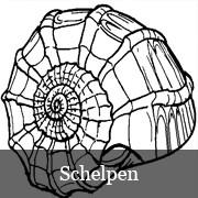 subgroepkleurplatenschelpen.jpg