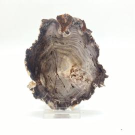 Versteend hout schijf met standaard, 161 gr