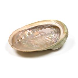 Abalone/Paua smudge schelp XS 7-10 cm