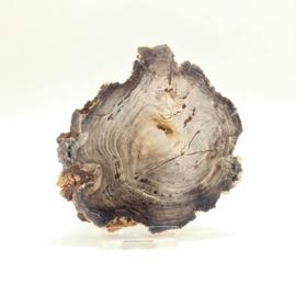 Versteend hout schijf met standaard, 144 gr