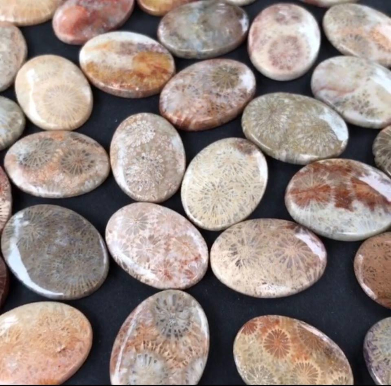 Versteend Fossielkoraal cabochon