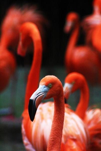 Diamond Painting set | Flamingo's