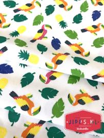 Parrots - Qjutie Kids - tricot