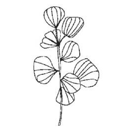 STEMPEL - PLANT