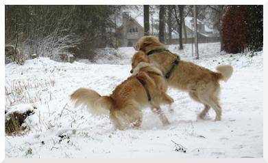 Onderkoeling bij honden tips van Botanisch in Balans