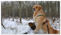 Tips voor honden in de sneeuw