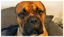 voedselallergie leaky gut hond