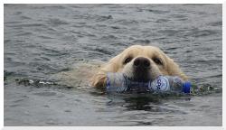 Blauwalg en botulisme zwemmen honden