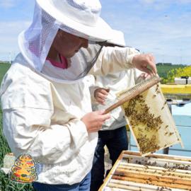 Bijenveger met nylonhaar