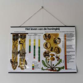 Poster 'Het leven van de honingbij'