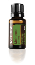 Tea Tree (Melaleuca) - 15 ml