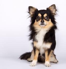 Knuffel op maat: knuffel portret van hond