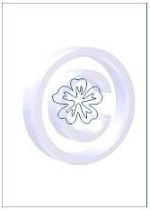 bloem 003