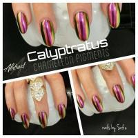 Calyptratus pigment