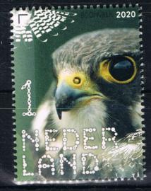 NEDERLAND VOGELS BIRDS 8/10 ++ D(B) 182